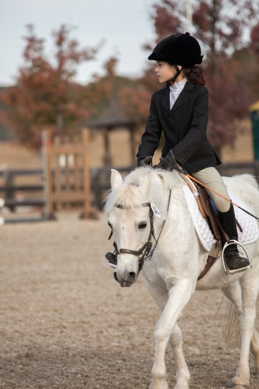 Dressage on Minnie